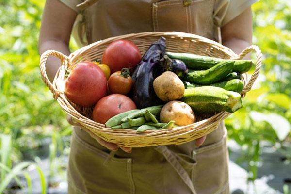 野菜を収穫します
